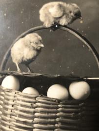 VERKOCHT | Briefkaarten | Pasen | 'Heureuses Pâques': MOREAU & KIVATISKY Phot. Fotokaart van kuikens en eieren