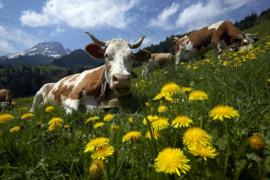 Blog | Franse Alpen | juli 2018