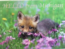 Verenigde Staten | Briefkaart Hello from Michigan met baby vosje