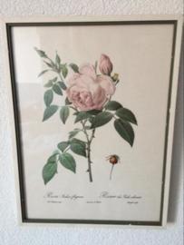 Schilderijtje Redoute roze roos met witte lijst '80