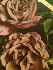 Verjaardag  |  Ansichtkaart - Briefkaart - Fotochroom Roze rozen Bonne Fete J.C. 311 Photo Veritable - 1919