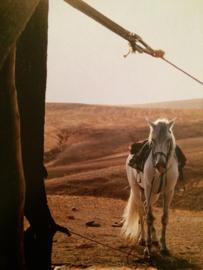 Briekaarten wilde dieren | Postcards Wild animals