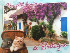 Frankrijk | Briefkaart met huisje, bloemen en poesjes | de Bretagne
