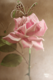 Brocante briefkaarten | Ansichtkaarten | Romantische rozen