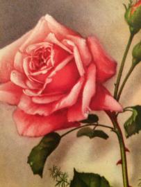VERKOCHT | 1913 - Antieke briefkaart met roze roos Bonne Fete