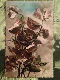 1950 | Vintage briefkaart met Lathyrus bloemen | Frankrijk