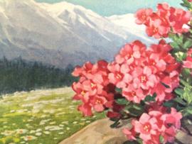 1910 | Briefkaarten | Polychrome |  bloemen en berglandschap