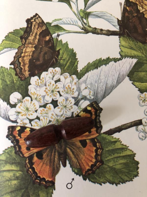 Knopen | Bruin | 40 mm donker eikenhouten houtje touwtje knoop jaren '20