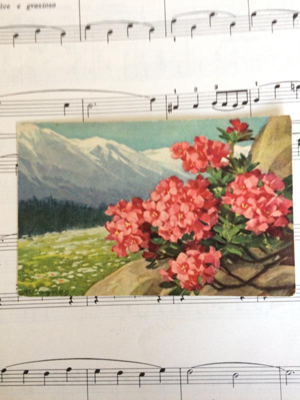 1910   bloemen en berglandschap
