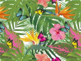 Tafelzeil - Tropische vlinder