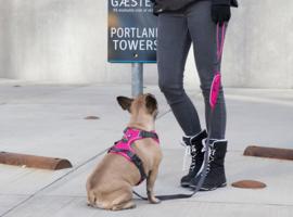 Harnas Comfort Walk Pro
