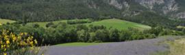 Ladrome - Bloesemwater - Lavendel - 200 ml