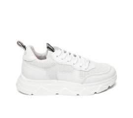 Steve Madden sneaker | Pitty White