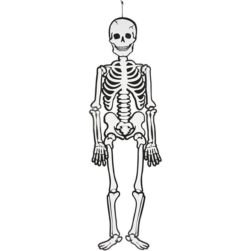Skelet Glow in the dark 120 cm