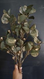 Eucalyptus tak met goud
