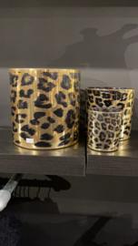 Windlicht Leopard xL