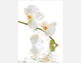 Mantiburi Fotobehang Orchidee water