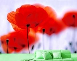Mantiburi Fotobehang Magical Poppies 12