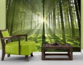 Mantiburi Fotobehang Fairytale Forest 247