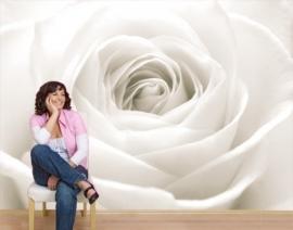 Mantiburi Fotobehang The White Rose 40