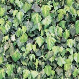 Bladeren Behang J434-04