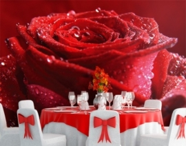 Mantiburi Fotobehang Proud rode roos