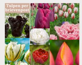 Gemengd boeket tulpen (10 stuks)