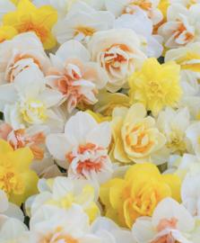 Boeket Narcissen