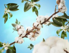 Parfumverspreider Cotton 200 ml Navulling