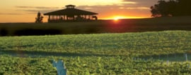 Tannat -  Reserva - Bodegas Carrau - Uruguay