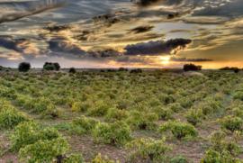 Tempranillo - Clearly Organic - La Mancha, Bio en Vegan
