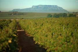 Touriga Nacional, Syrah - Stellenbosch - Wijnhuis Villiera - Down to earth - bio - vegan