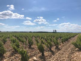 Syrah, Grenache, Carignan - Ventoux - Domaine Brunely 2018