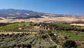 Sangiovese, Colorino - Tenuta di Sesta - Rosso Toscane - Camponovo