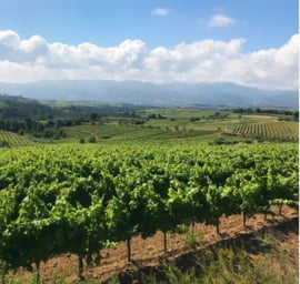 Macabeo, Xarel·lo,  Parellada - Cava - Covides Vineyards