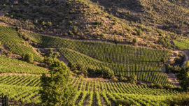 Cabernet Franc, Cabernet Sauvignon, Carmenere, Merlot - Primus The Blend Apalta, Colchagua, Chili  -