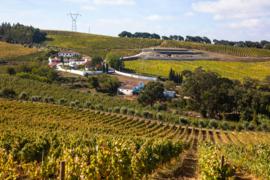 Tinta Roriz, Castelao, Touriga Nacional, Syrah, Alicante Bouschet - Red, Quinta de Chocapalha - Lissabon