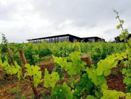 Cabernet Sauvignon - Tarani, Vinovalie ZW Frankrijk