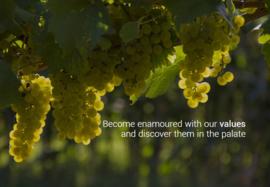 Pinot Grigio - Spumante Extra Dry Giol Bio & Vegan