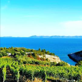 Posip  - Merga Victa,  Smokvica village, Korcula Island Kroatie