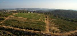 Cabernet Sauvignon, Merlot, Petit Verdot, Cabernet Franc- Grand Vin - Domaine Castel - Israel