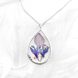 Blom! druppel Hortensia Korenbloem