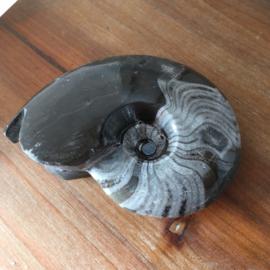 Ammoniet fossiel 272 gr