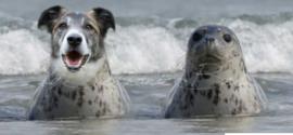 Opdracht (zee)hond