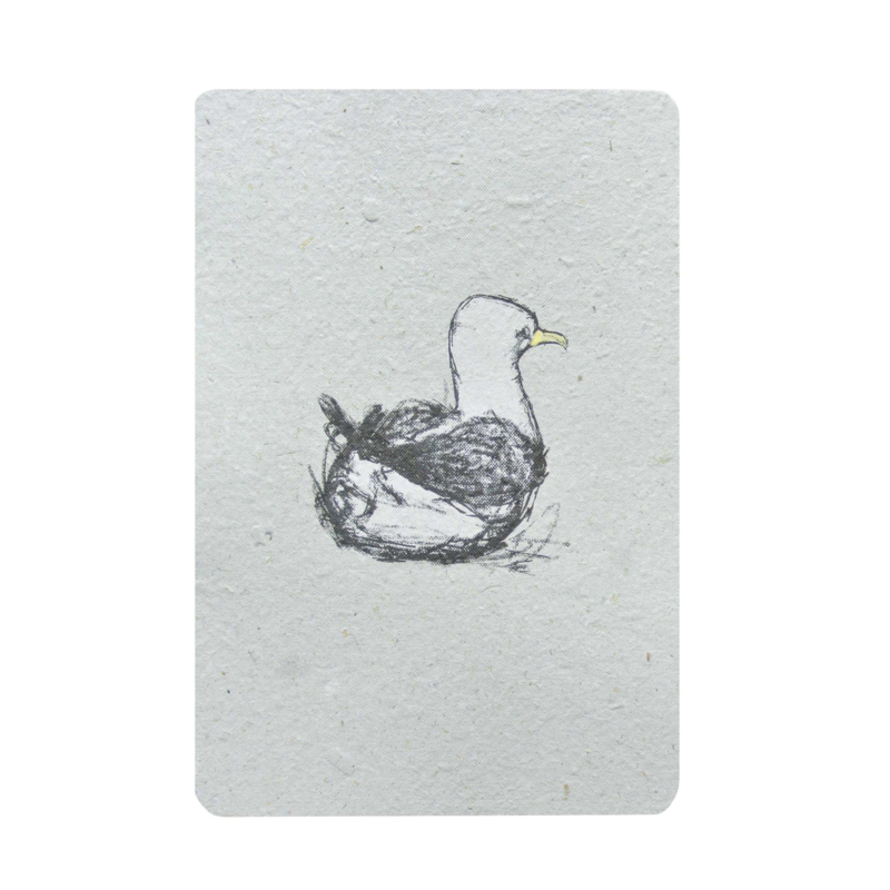 zwemmende meeuw