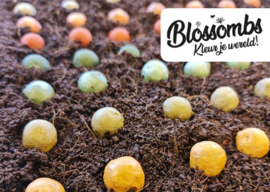 Blossombs