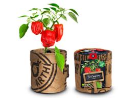 Kitchengarden - Bio Paprika