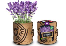 Kitchengarden - Bio Lavendel
