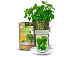 Teagarden - Bio Citroenmelisse
