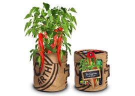 Kitchengarden - Bio Chilipeper